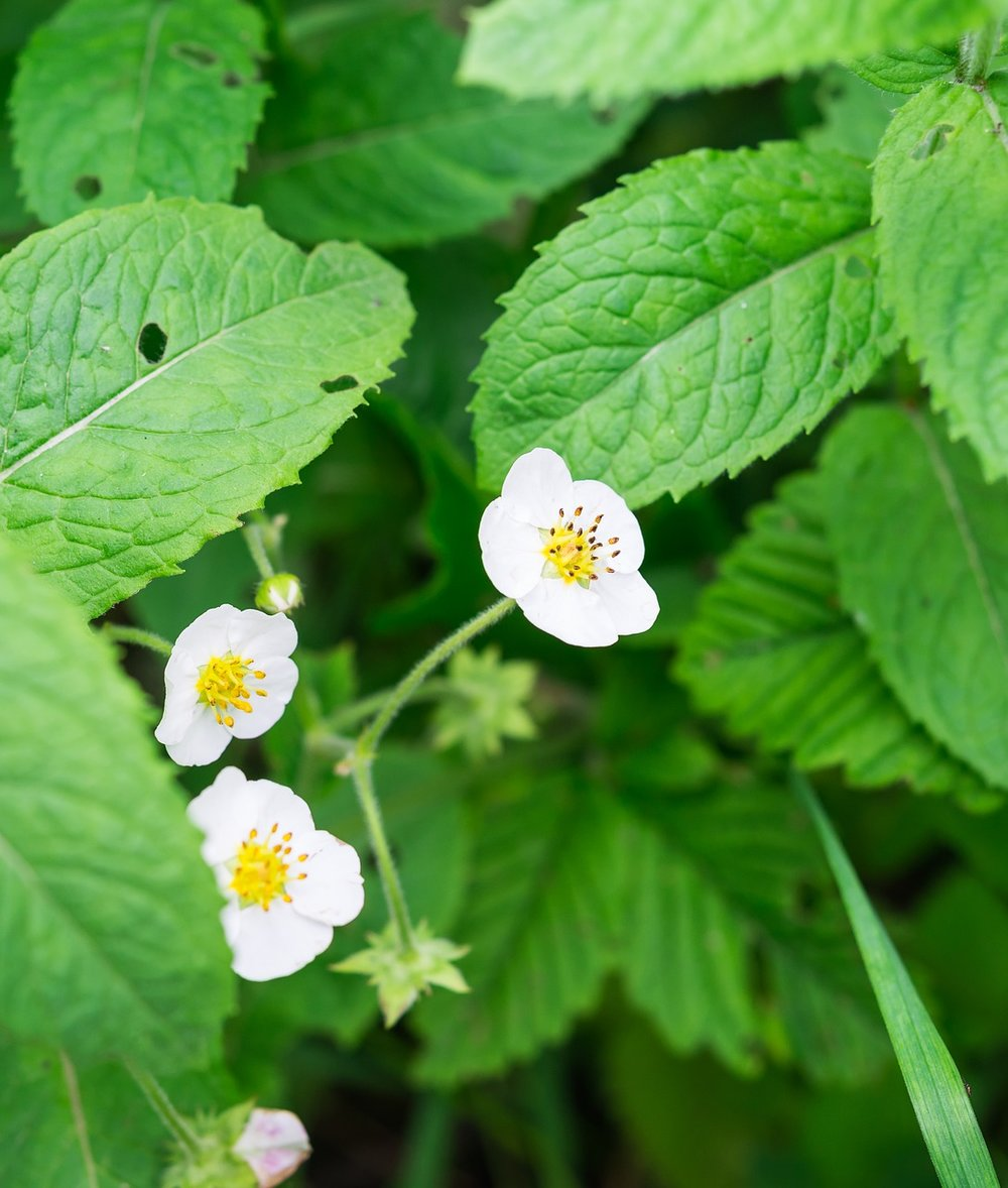 flower-pixabayfreeimage.jpg