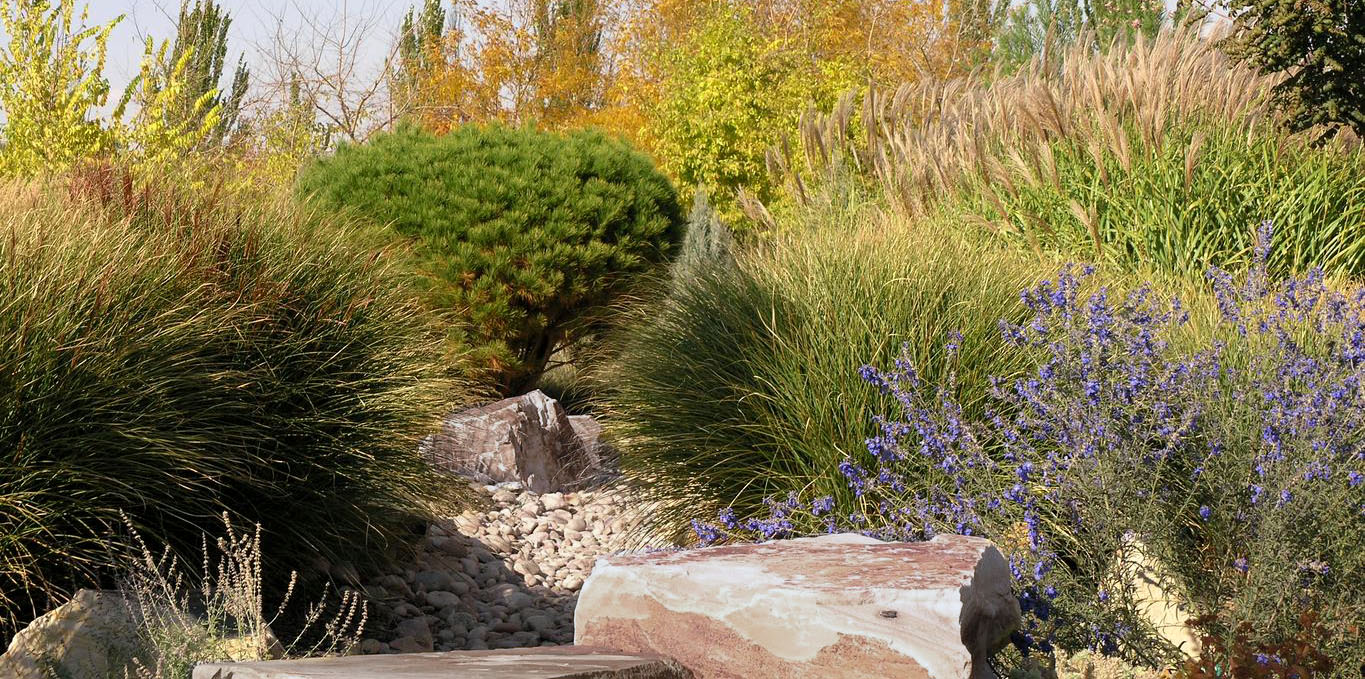 The Truth About Drought Tolerant Plants Seattle S Favorite Garden Store Since 1924 Swansons Nursery