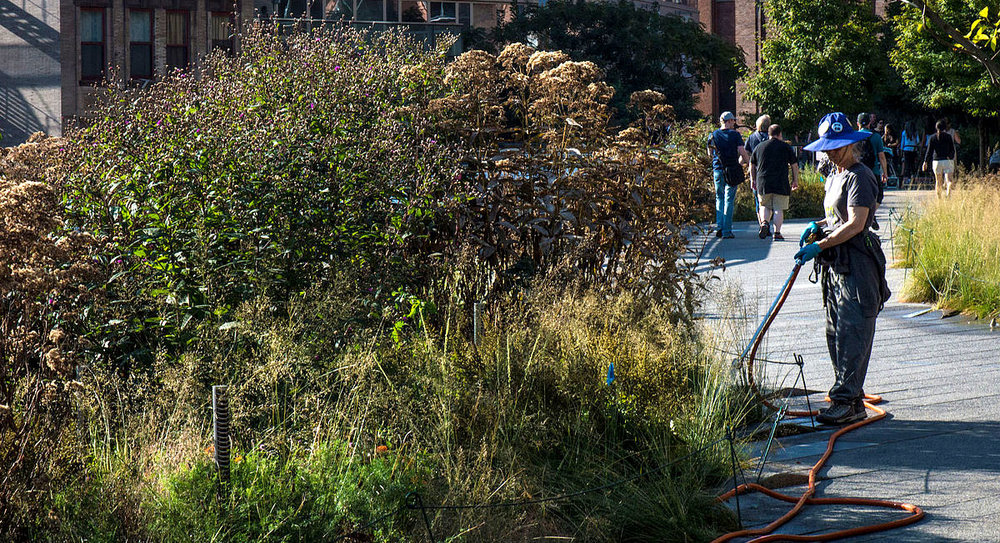 Even the drought-tolerant plants on New York City's High Line need periodic watering. (image: Wikimedia Commons)