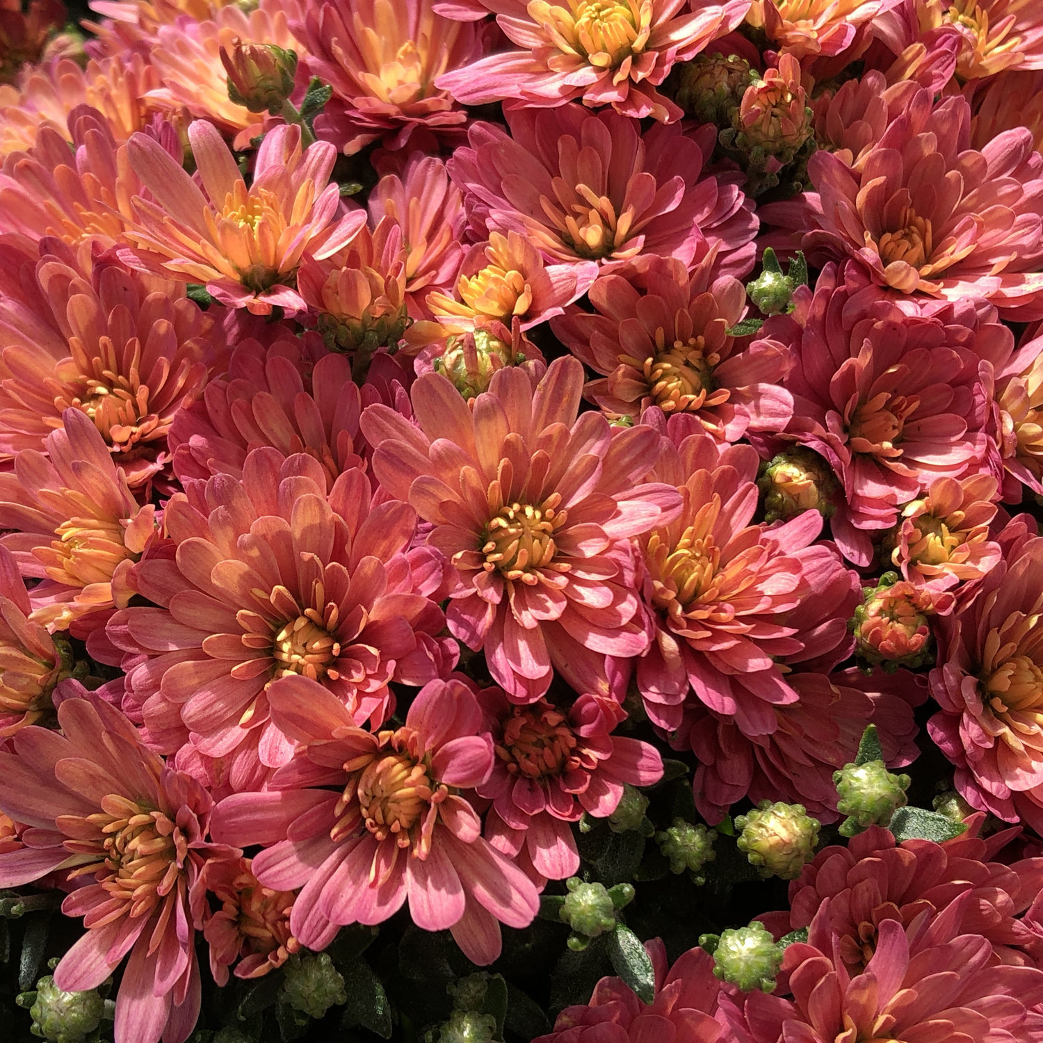 Our Favorites For Late Summer To Fall Swansons Nursery Seattles