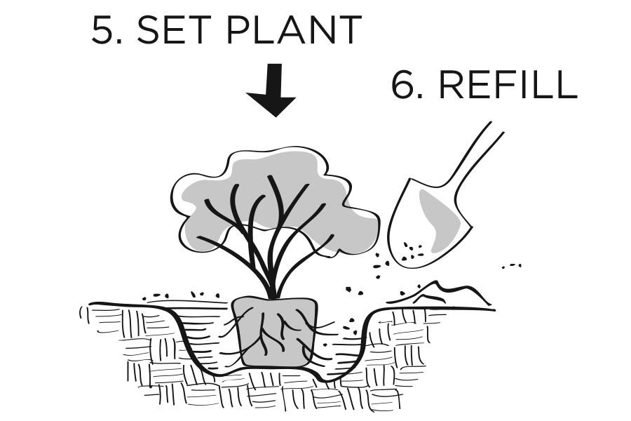 plantingdiag5-6.jpg