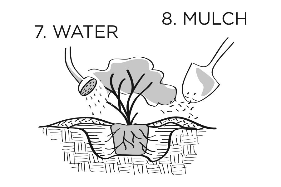 plantingdiag7-8.jpg