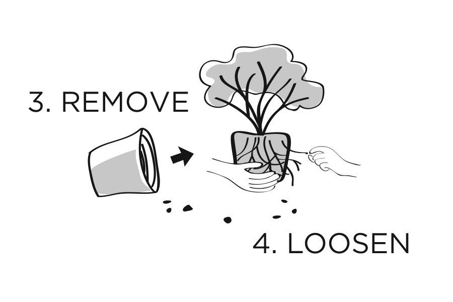 plantingdiag3-4.jpg