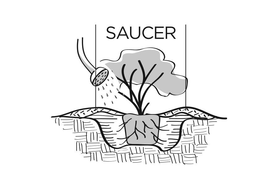 plantingdigram_saucer.jpg