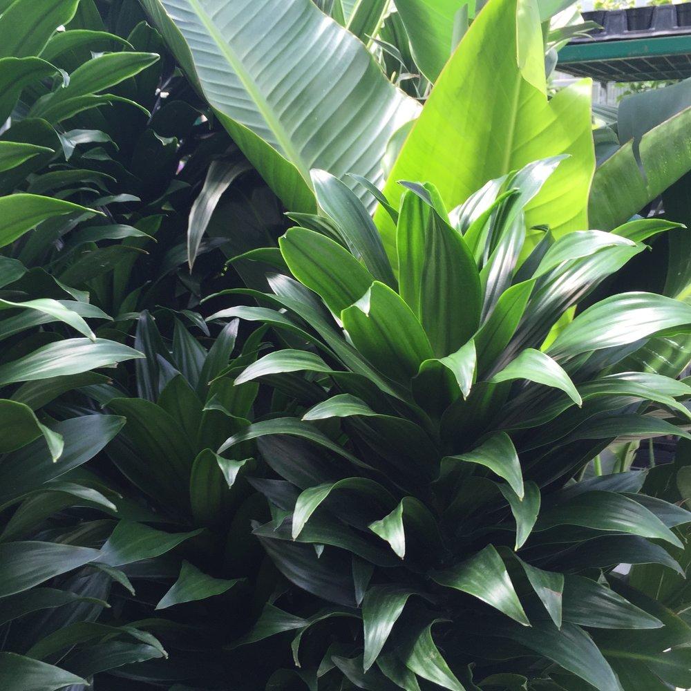 Indoor plants Jul 27, 12 52 37 PM.jpg