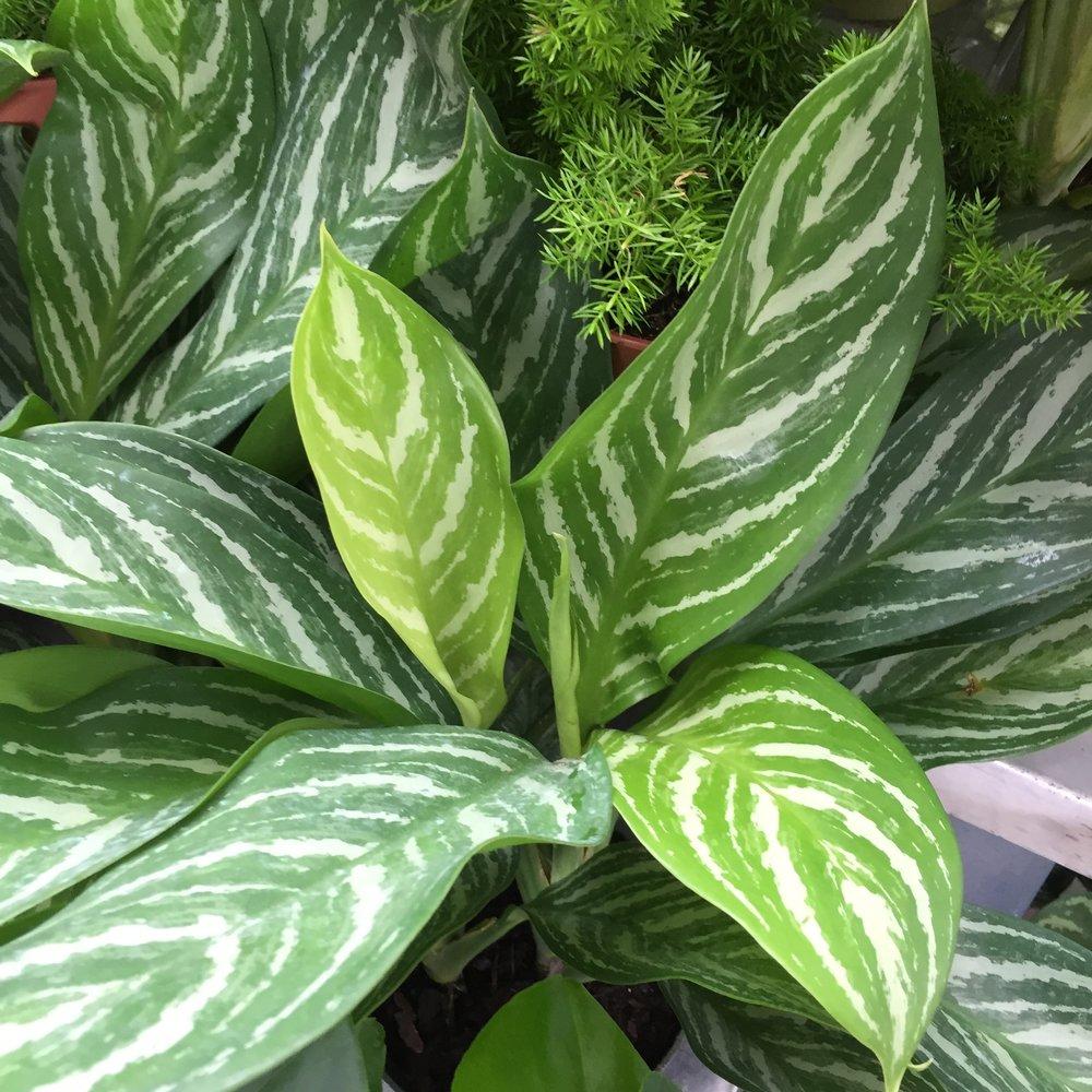 indoor plants 10_2017 (74).jpg