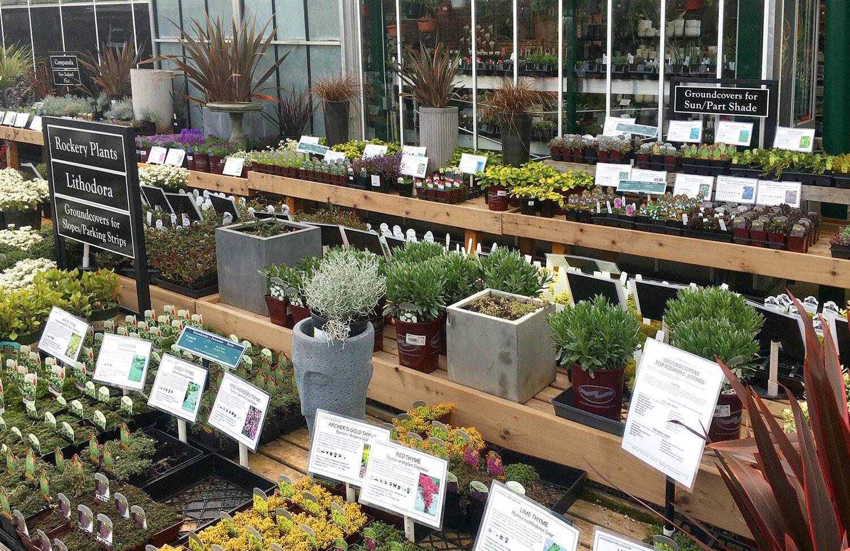 Reading the Signs Swansons Nursery Seattles Favorite Garden – Garden Plant Signs