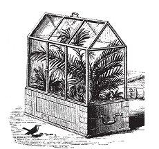 Victorian Wardian Case
