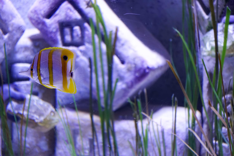 Freshwater aquarium fish in dubai - Dubai_aquarium 24 2 Jpg
