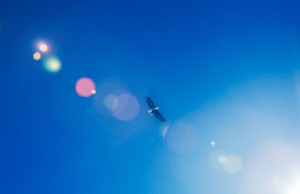 eagle-soaring-sky.jpg