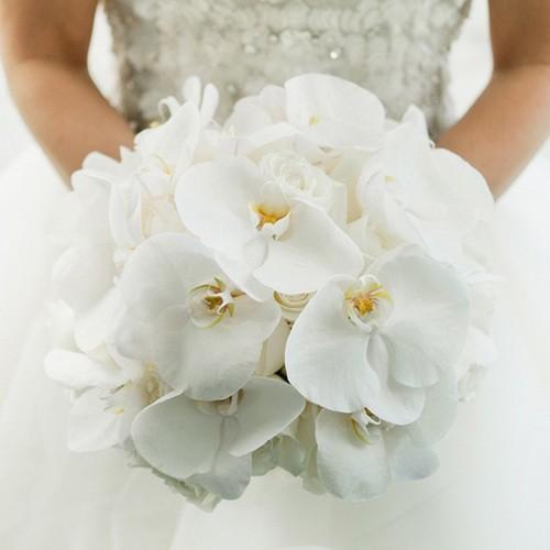 orchideen+wit.jpg