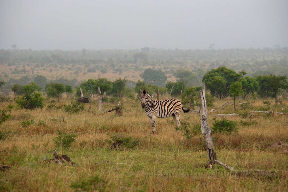 This photo, taken at Ngala Private Game Reserve, gives a fairly good idea (despite the fog) of the expanseof this reserve.