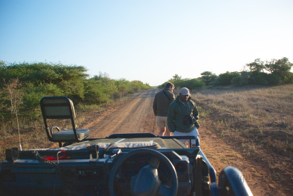 The view from the truck of Able (facing truck) and Giles (facing away from the truck) checking for tracks of the cheetah.