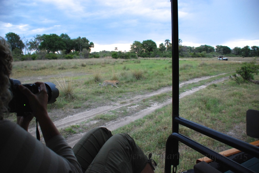 No thoughts of email, or access to it, while photographing a leopard in the Okavango Delta while at Little Tubu.