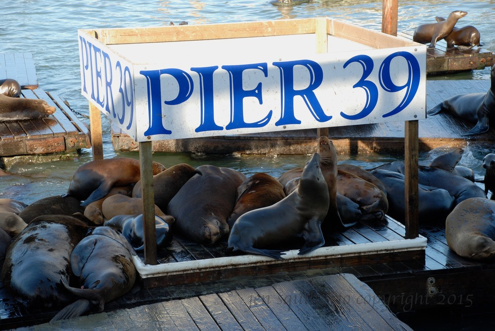Pier 39 2008