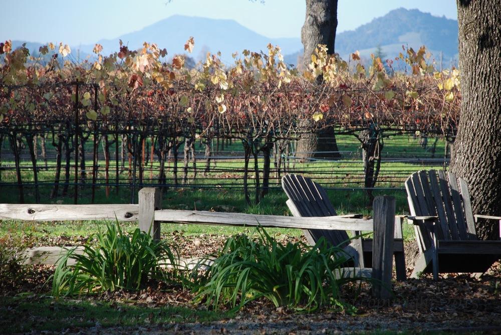 Fall at a Winery (2008)