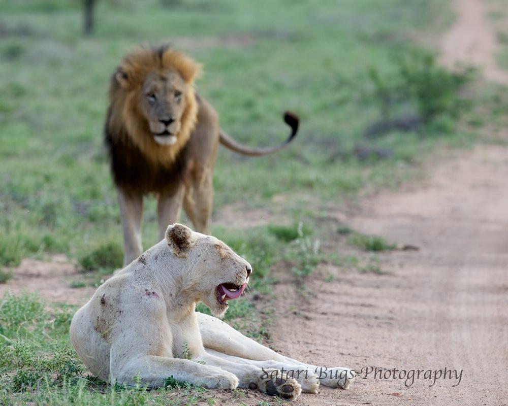 White Lioness Profile
