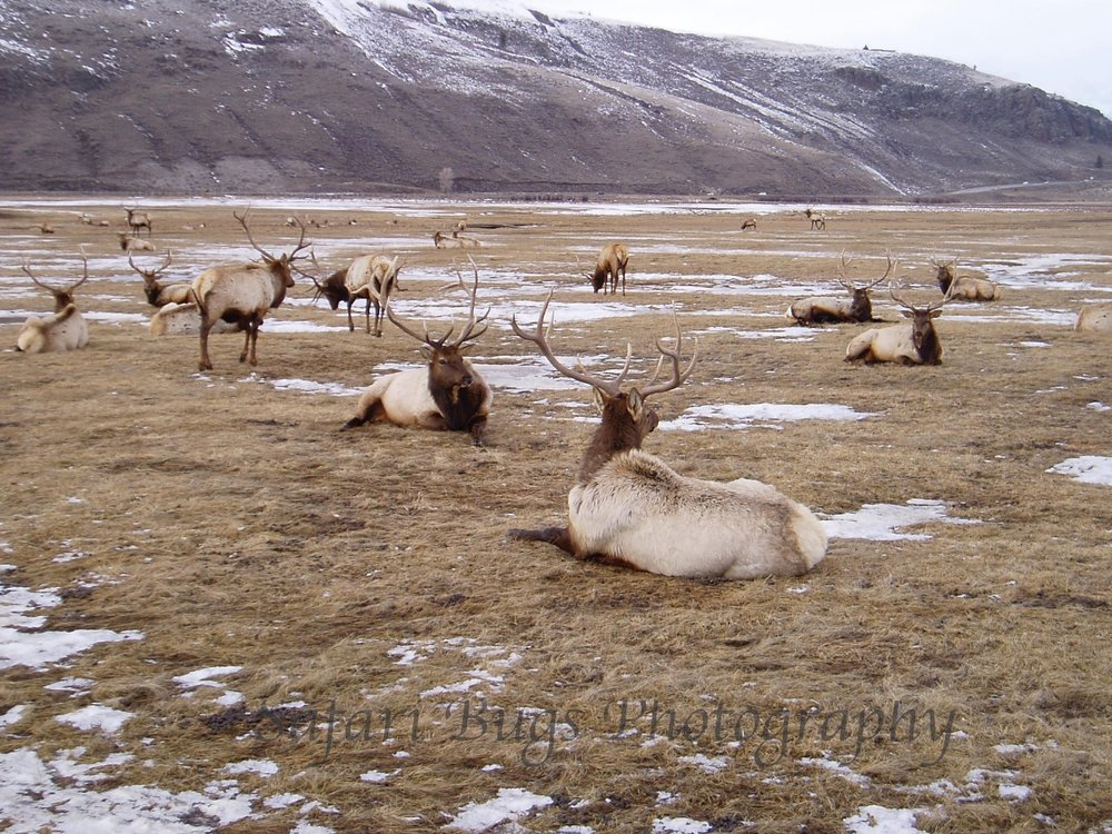 Sleigh Ride, National Elk Refuge