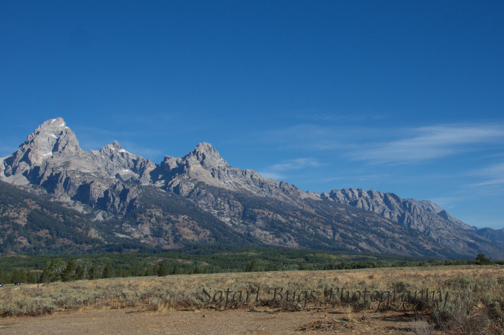 Grand Teton V Safari Bugs.jpg