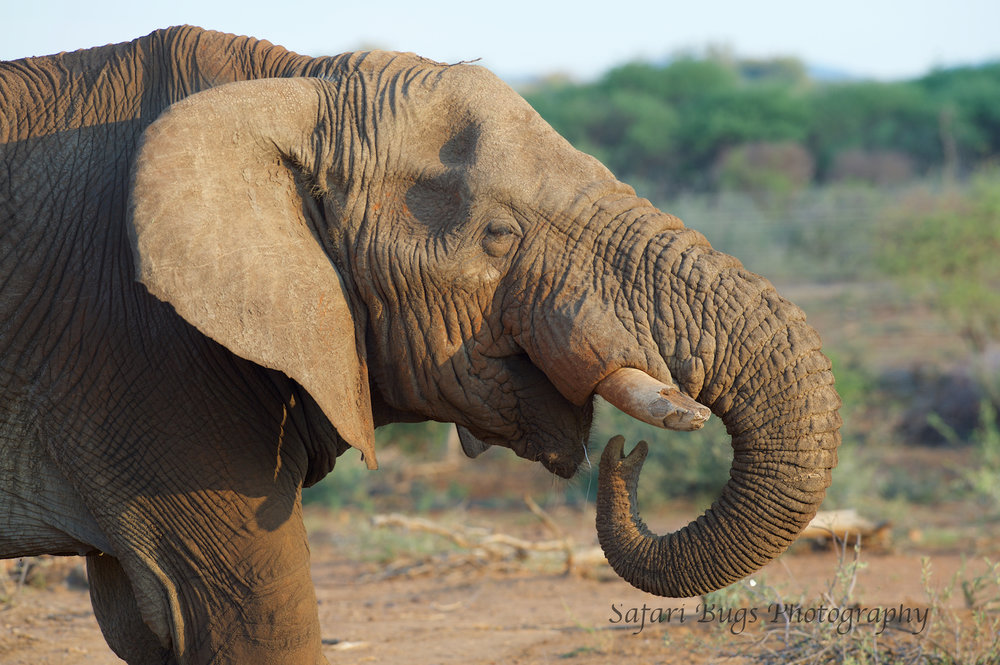 Mateya Elephant.jpg