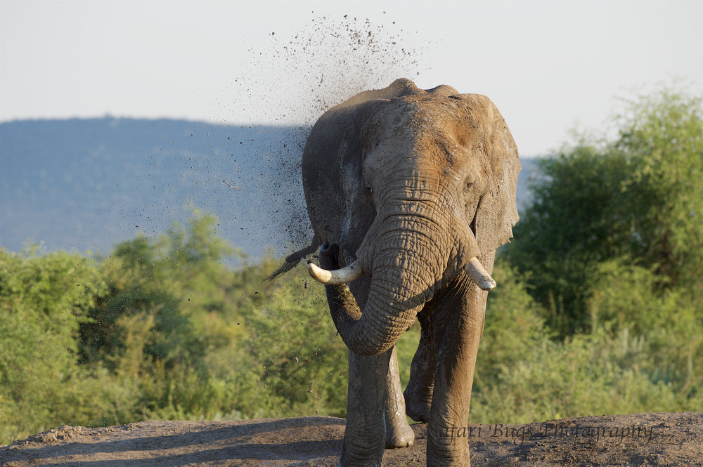 Mateya Elephant (1).jpg