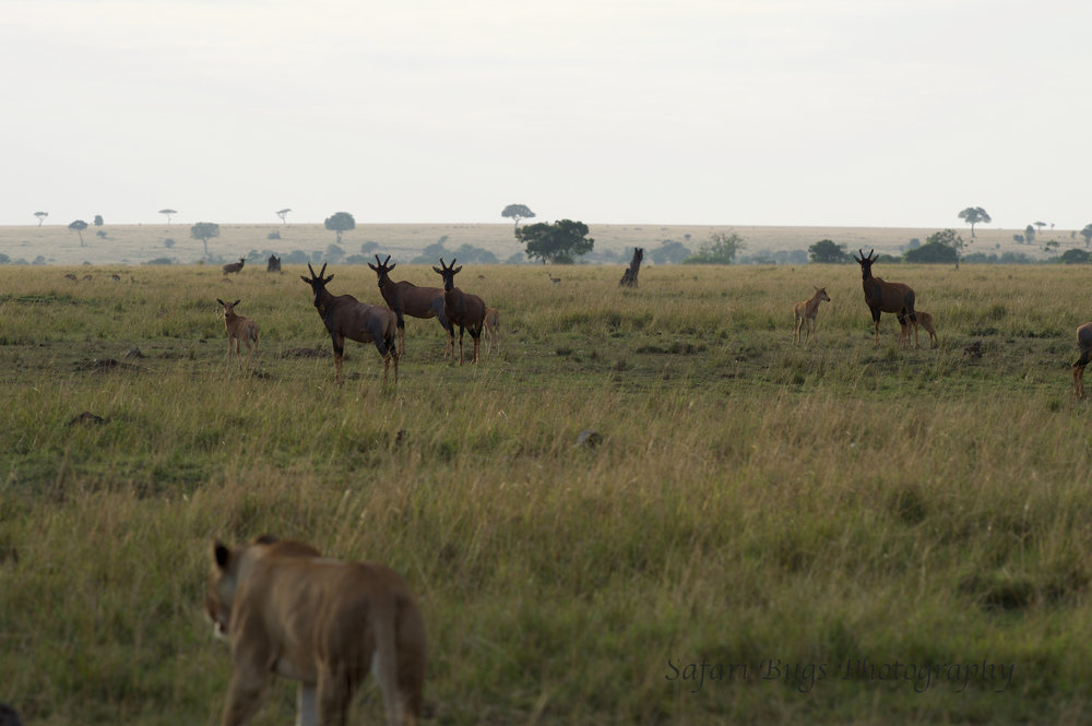 Lioness Safari Bugs (3).jpg
