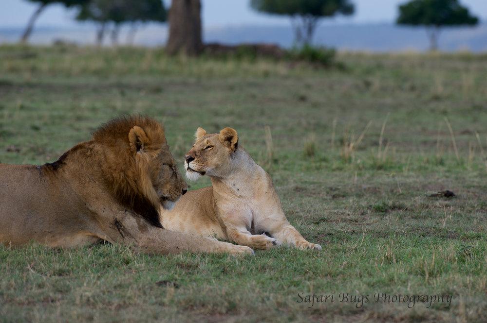 Lioness Safari Bugs (5).jpg
