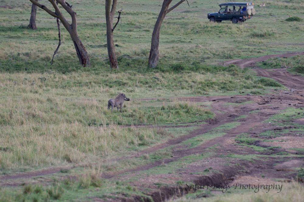 Warthog Safari Bugs.jpg