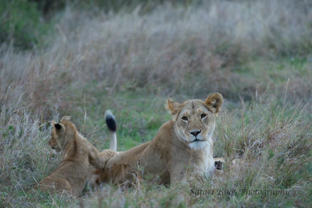Lioness Safari Bugs (7).jpg