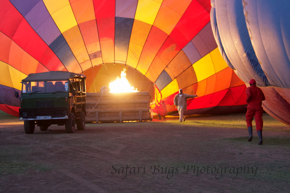 Balloon Safari Bugs (1).jpg