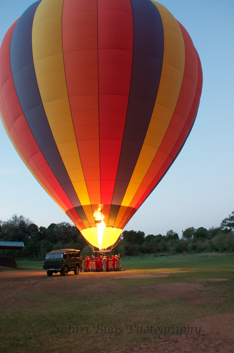 Balloon Safari Bugs (4).jpg