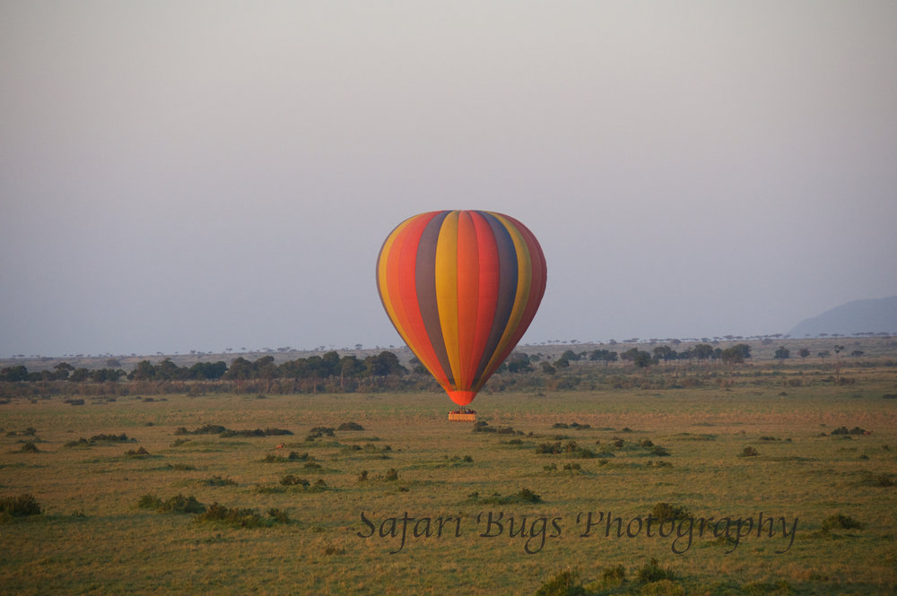Balloon Safari Bugs (7).jpg