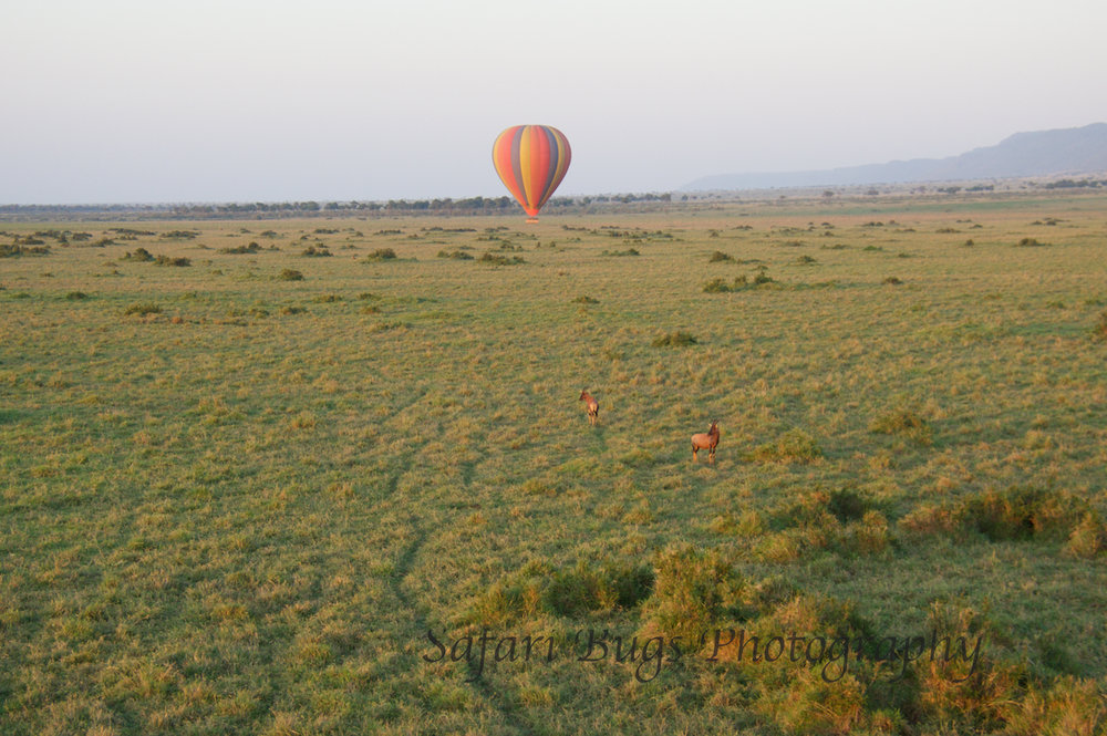Balloon Safari Bugs (8).jpg