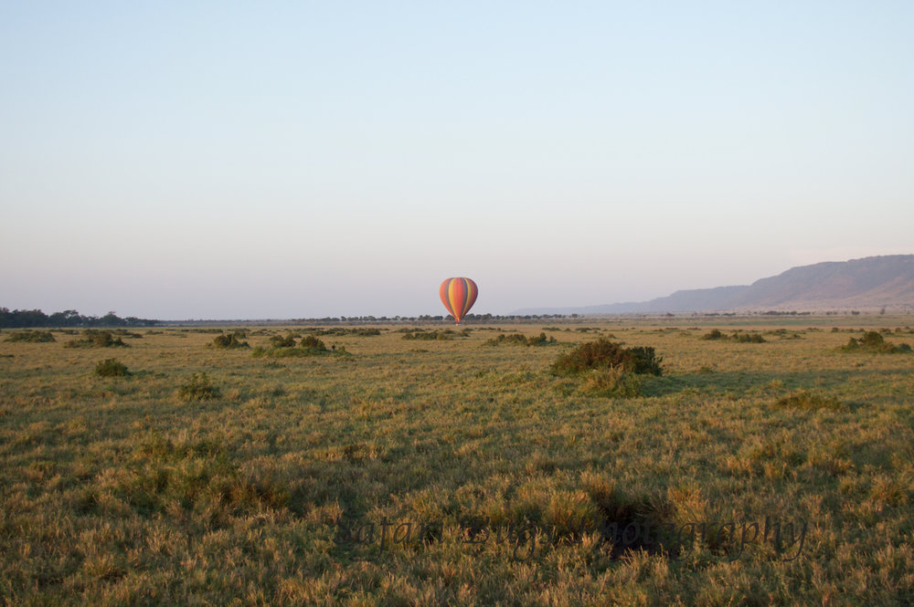 Balloon Safari Bugs (9).jpg