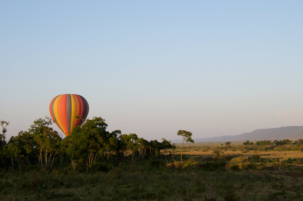 Balloon Safari Bugs (12).jpg