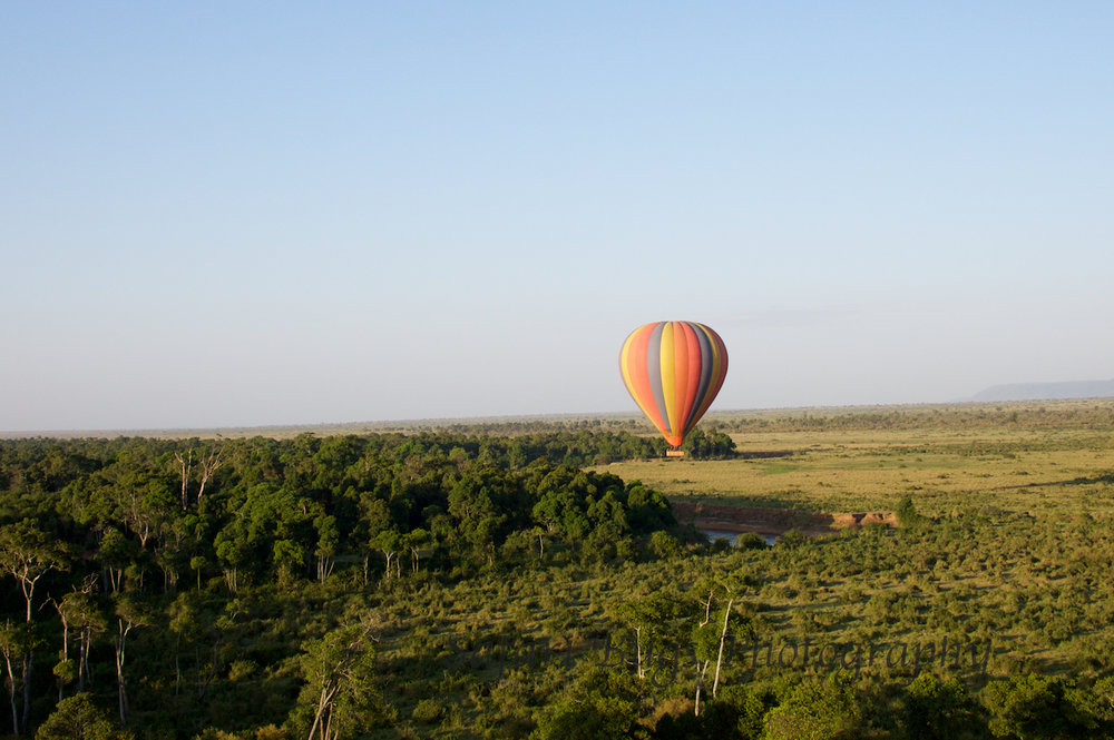 Balloon Safari Bugs (15).jpg