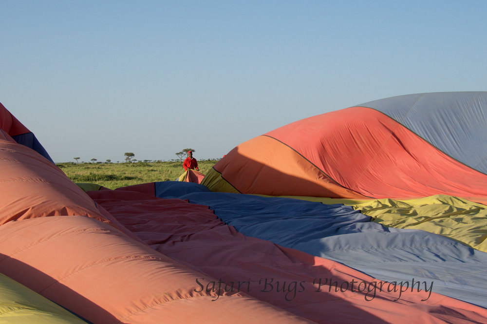 Balloon Safari Bugs (18).jpg