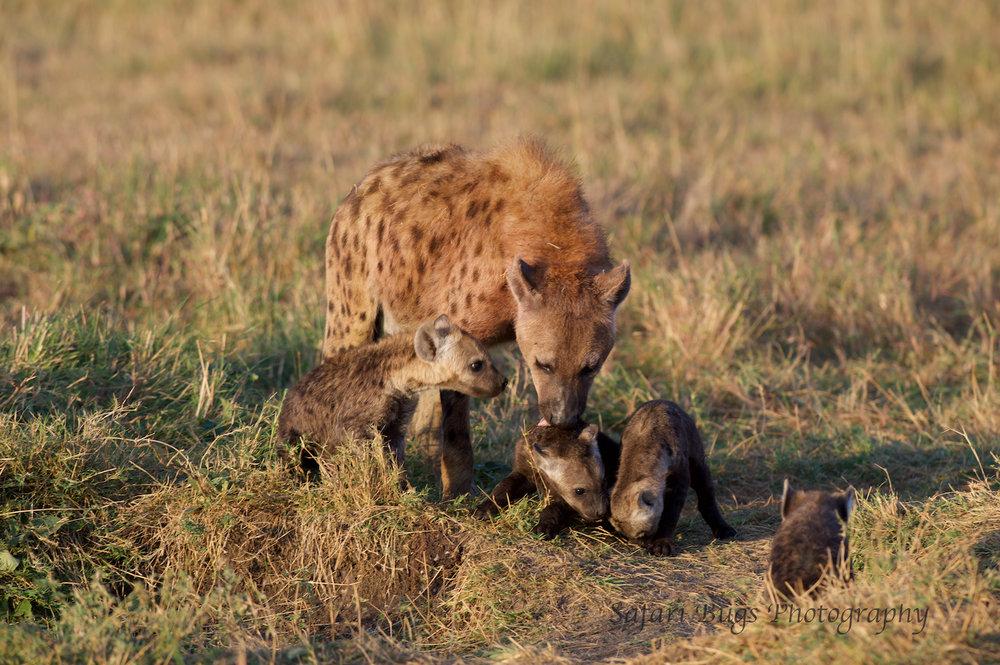 Hyena Safari Bugs (2).jpg
