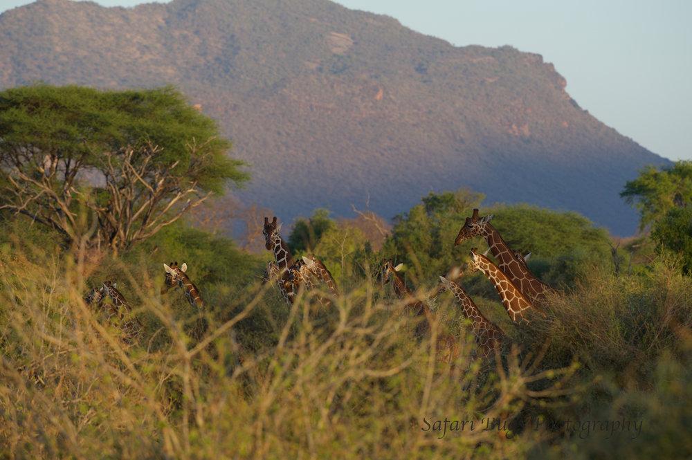 Sarara Safari Bugs (29).jpg