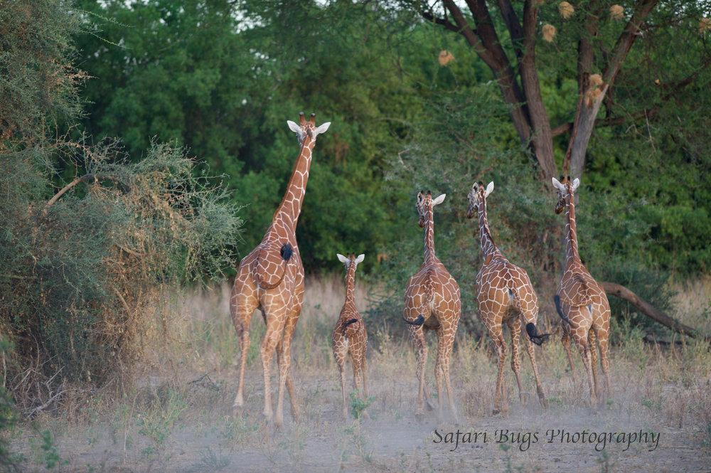 Sarara Safari Bugs (30).jpg