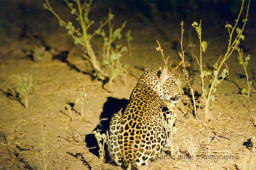 Sarara Safari Bugs (34).jpg