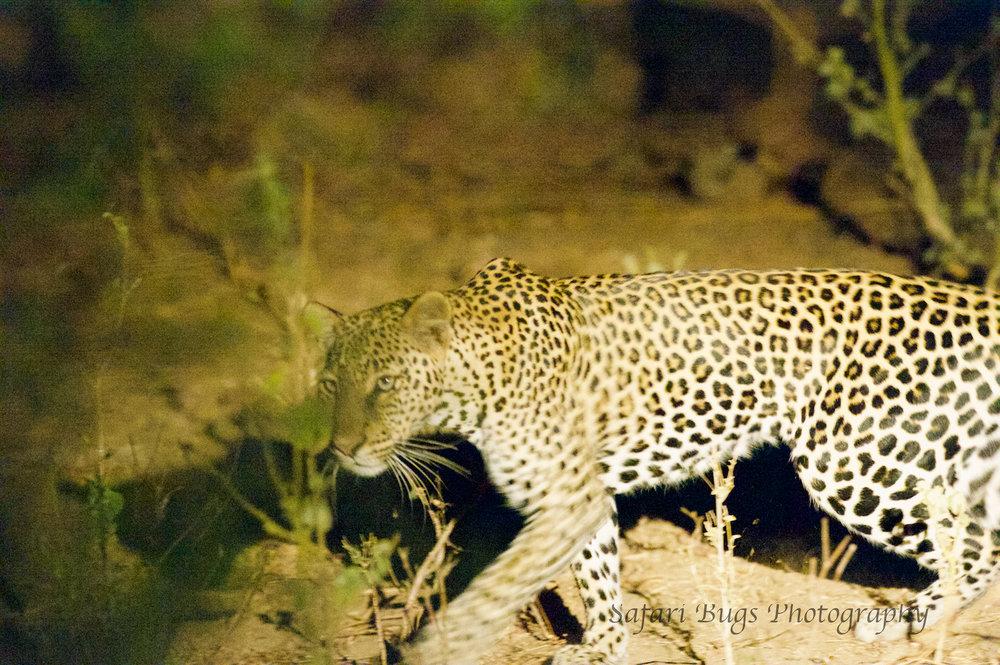 Sarara Safari Bugs (36).jpg