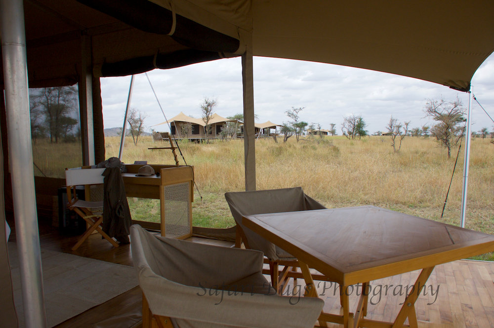 Safari Bugs Roving Bushtops (23).jpg