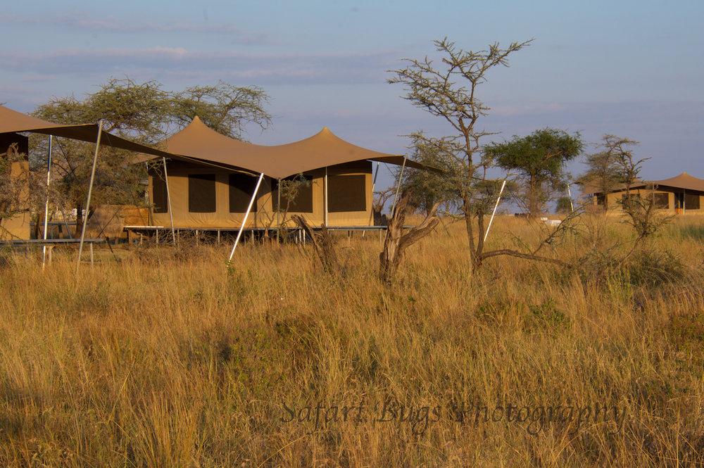 Safari Bugs Roving Bushtops (27).jpg