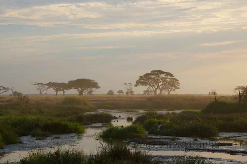 Safari Bugs Roving Bushtops (29).jpg