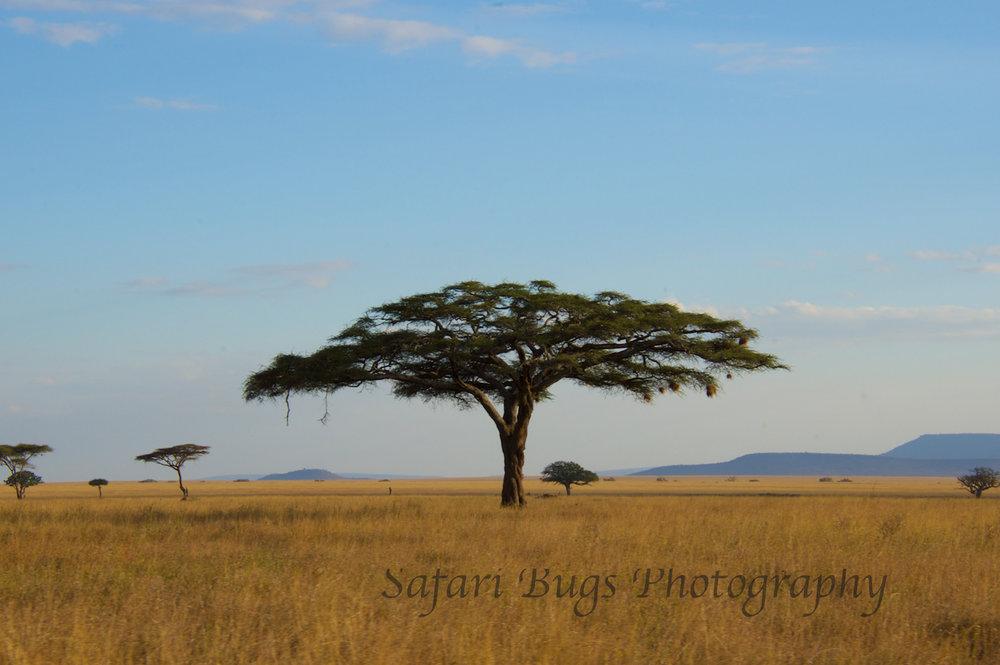 Safari Bugs Roving Bushtops (30).jpg