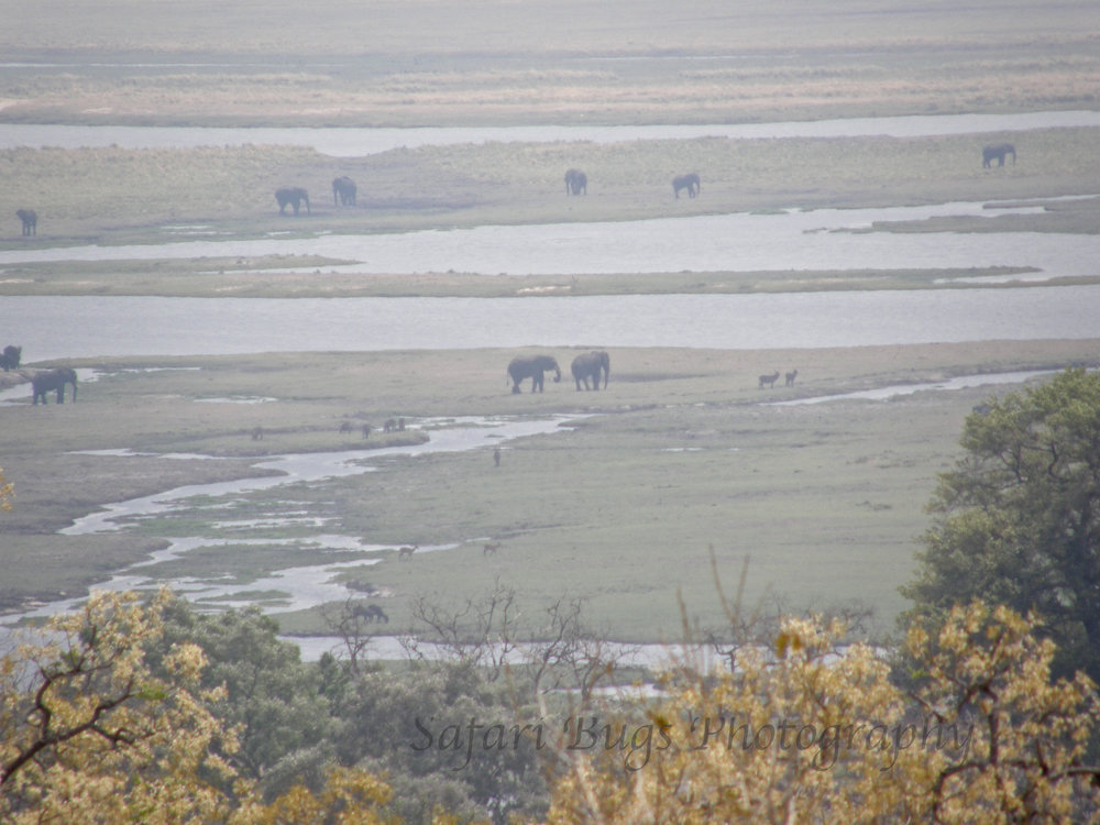 Our first view of elephants in Chobe National Park in 2007