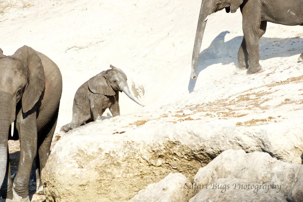 Chobe Game Lodge elephant (4).jpg