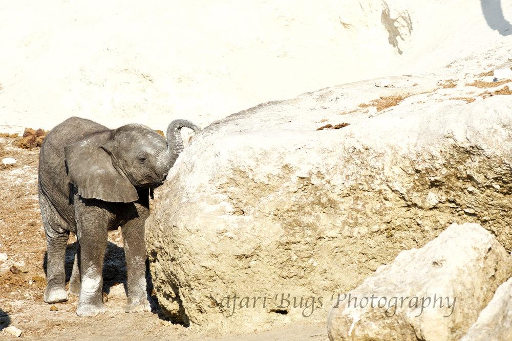 Chobe Game Lodge elephant (5).jpg