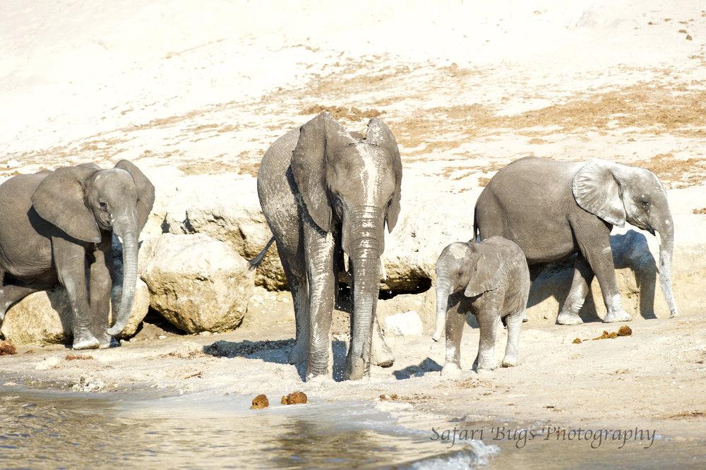 Chobe Game Lodge elephant (7).jpg